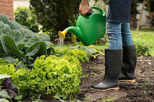 Woman watering her garden with watering can