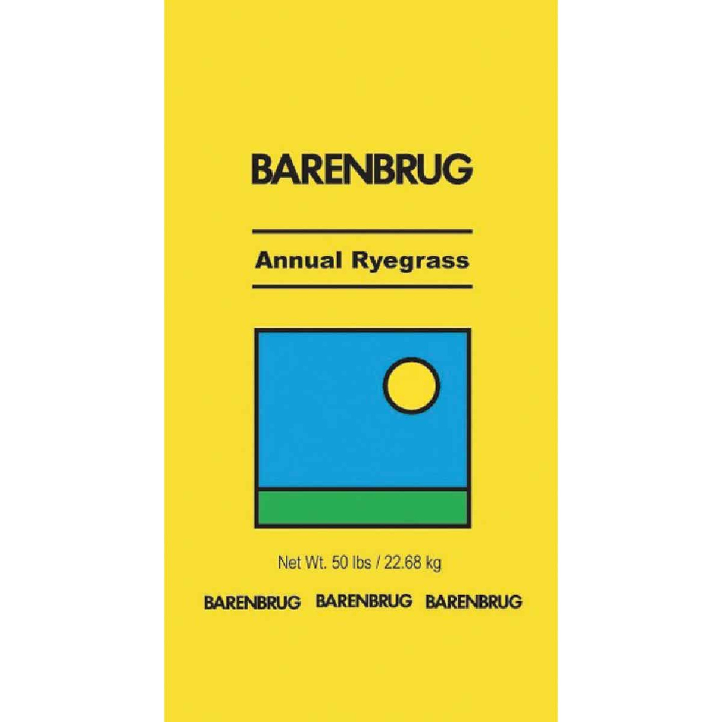 Barenbrug 50 Lb. 6250 Sq. Ft. Coverage 100% Annual Ryegrass Grass Seed Image 1